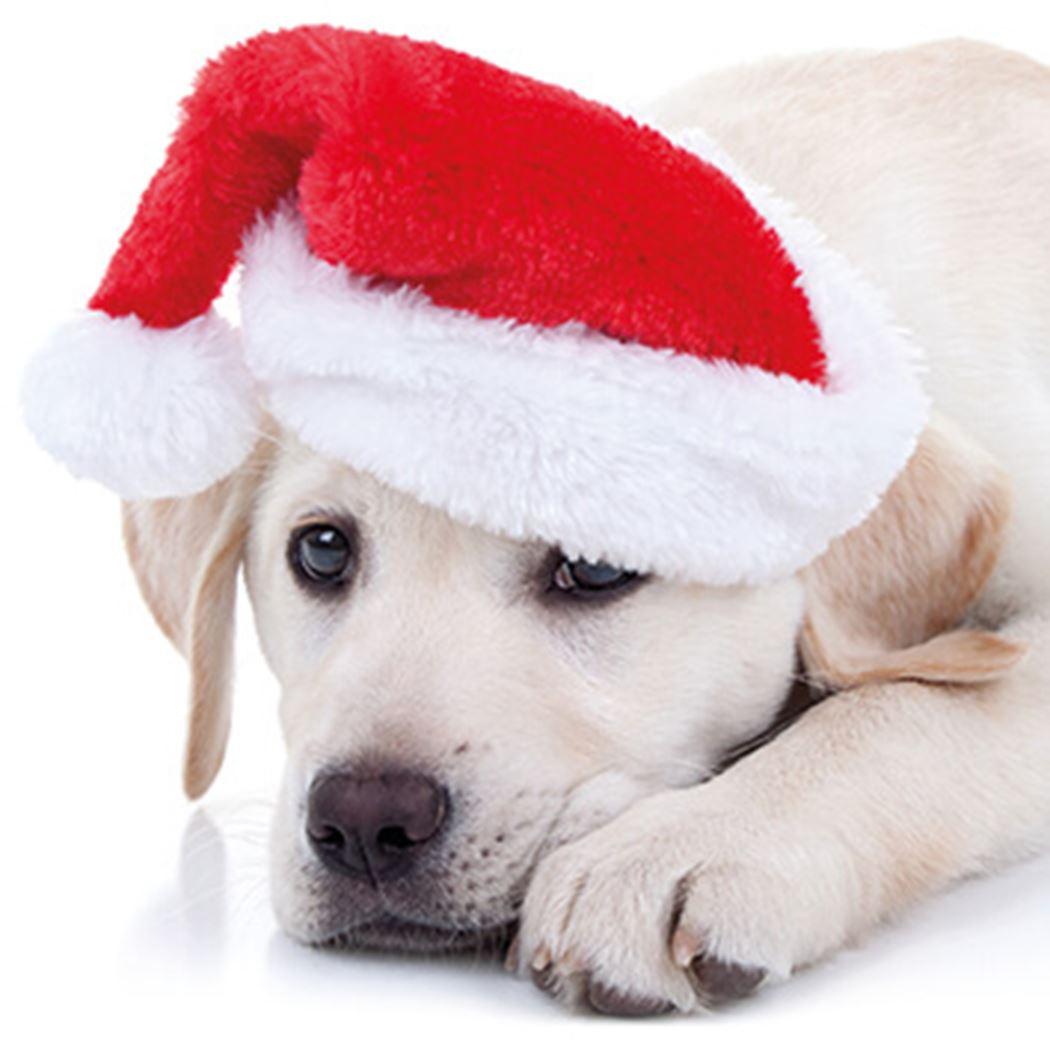 Santa paws - CICRA